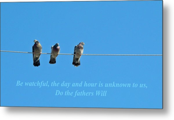 Watchful Metal Print by Terence McSorley