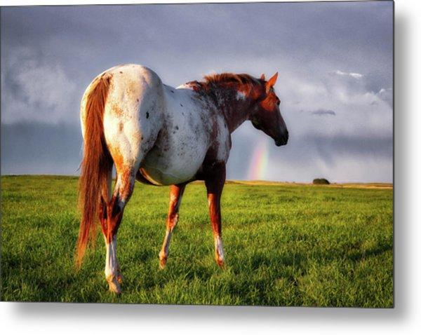 Watching The Rainbow Metal Print
