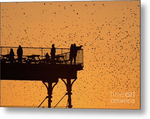 Watching The Sunset And Starlings In Aberystwyth Wales Metal Print