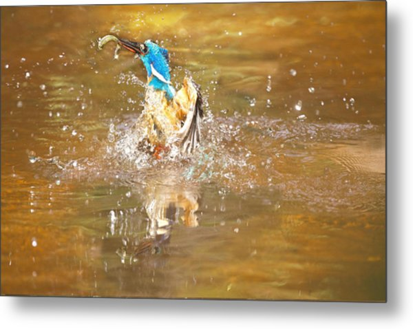 Water Birth Metal Print by Charl Roux