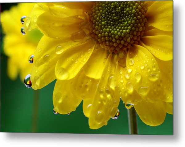 Water Drop Reflections I I I Metal Print