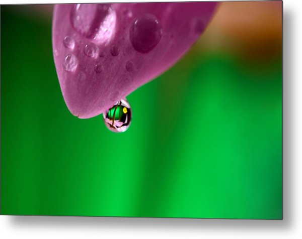 Water Drop Reflections With Purple Metal Print