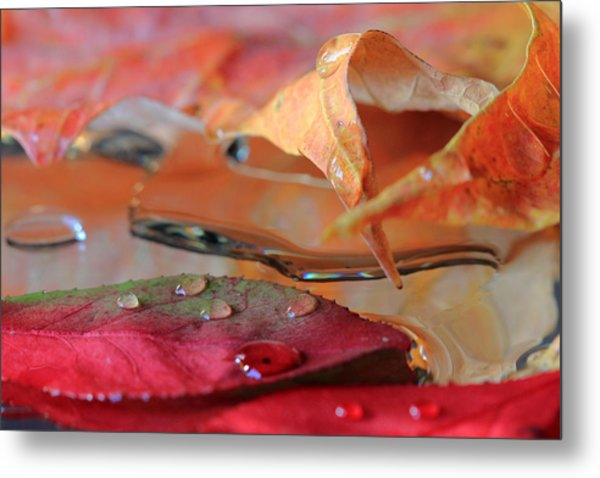 Water Drops On Autumn Leaves Metal Print