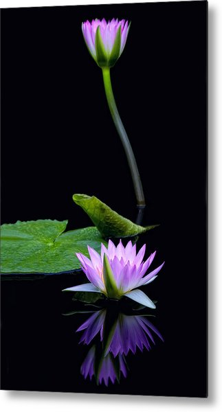 Water Lilies And Reflections Metal Print by Margaret Barry