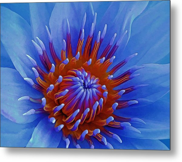 Water Lily Center Metal Print