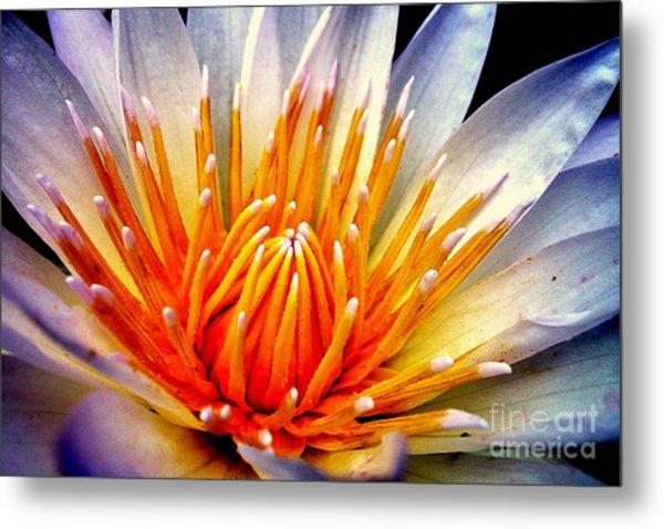 Water Lily Flower Metal Print