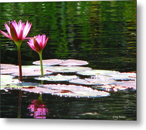 Water Lily Metal Print by Greg Patzer