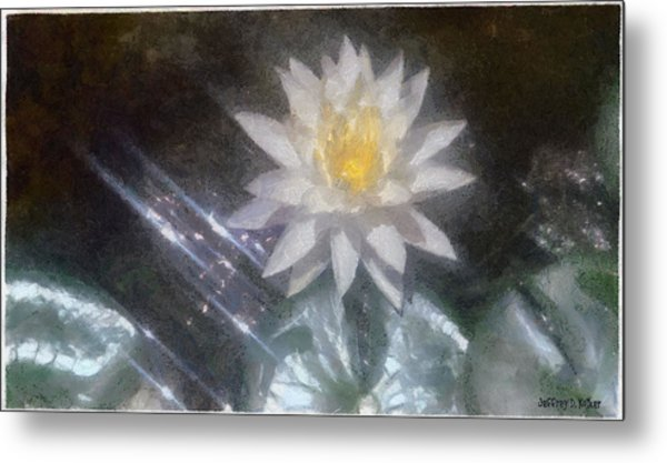 Water Lily In Sunlight Metal Print