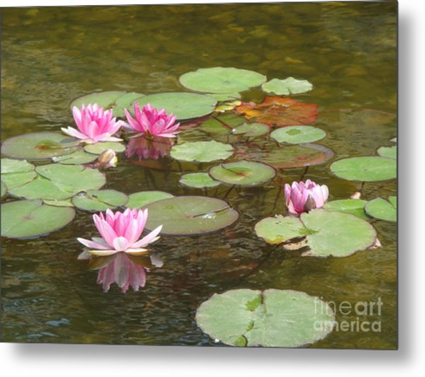Water Lily Metal Print by Tierong Fu