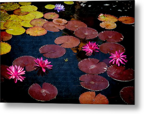 Water Lily World Metal Print