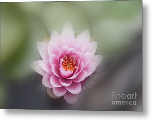 Water Lotus Flower Metal Print