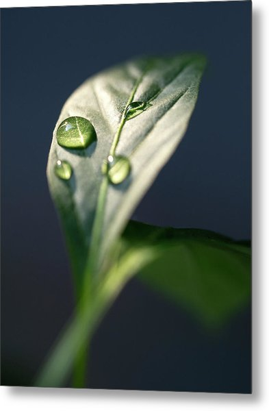 Droplets Metal Print