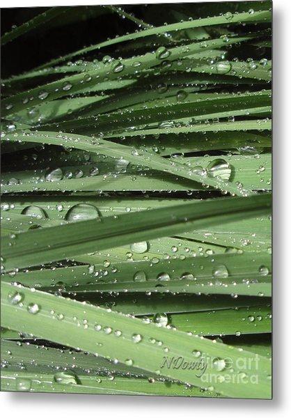 Water On Siberian Iris Metal Print