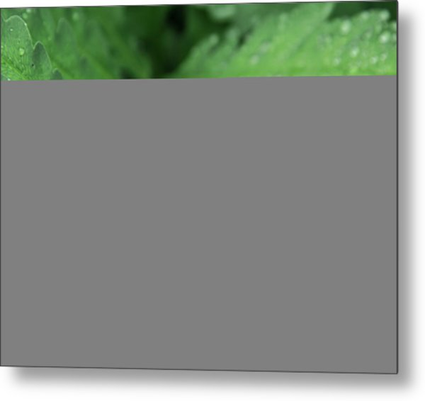 Water On The Fronds Metal Print