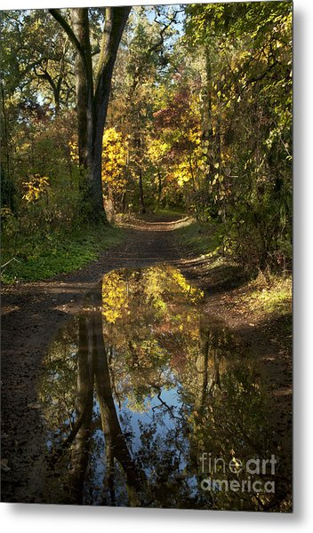 Water On The Trail Metal Print