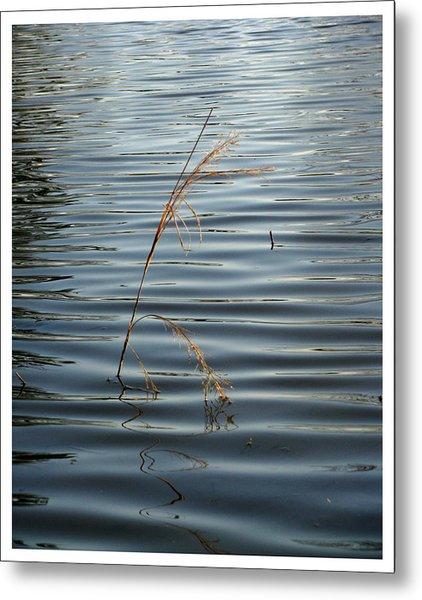 Water Reed Metal Print by Dawn Davis