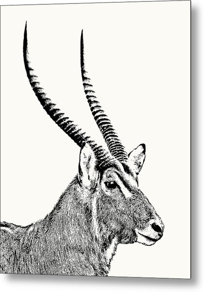Waterbuck Male Portrait Metal Print