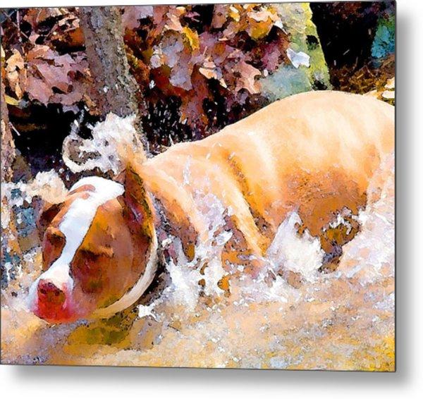 Waterdog Metal Print by John Toxey