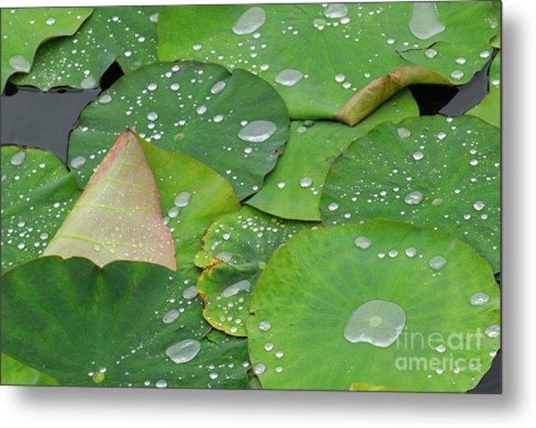 Waterdrops On Lotus Leaves Metal Print