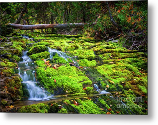 Metal Print featuring the photograph Waterfall Over Mossy Rocks by Elena Elisseeva