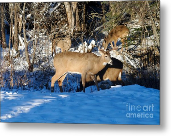 Waterhole Gathering Metal Print