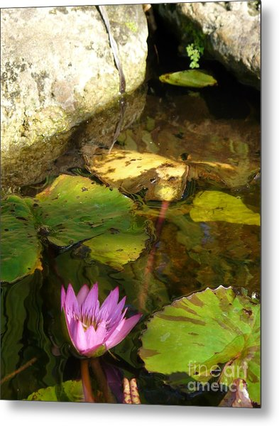 Waterlilies 2 Metal Print by Donna McLarty
