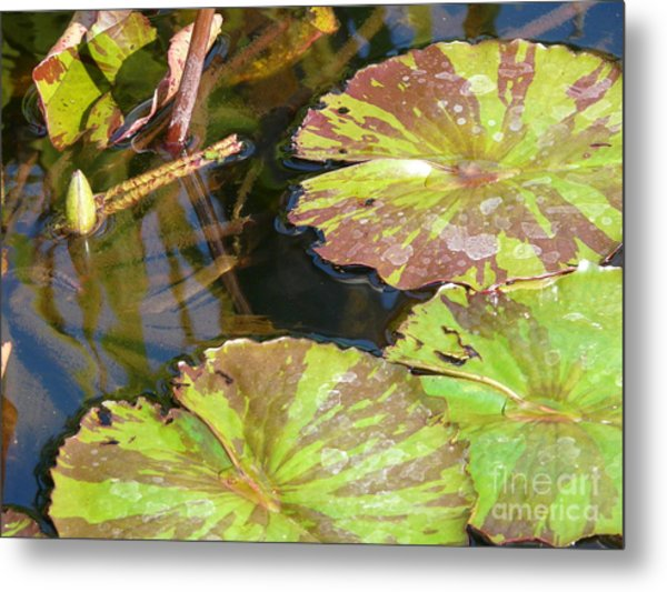 Waterlilies Metal Print by Donna McLarty