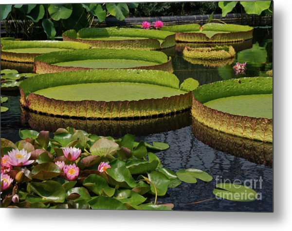 Waterlilies North And South Metal Print