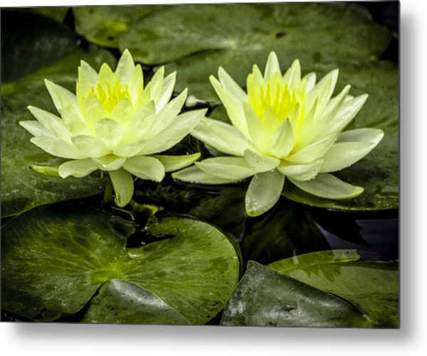 Waterlily Duet Metal Print