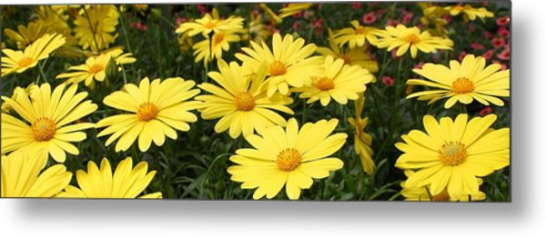 Waves Of Yellow Daisies Metal Print