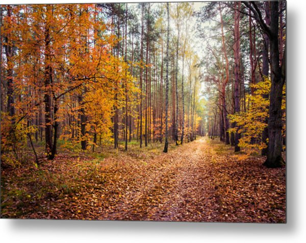 Way Of Light Metal Print