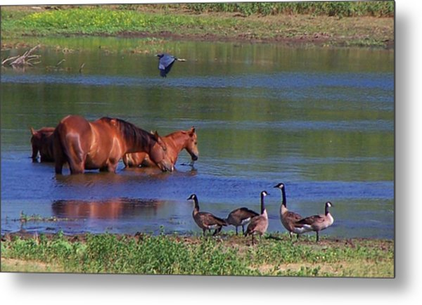 We Are All Friends Here. Metal Print by Lilly King
