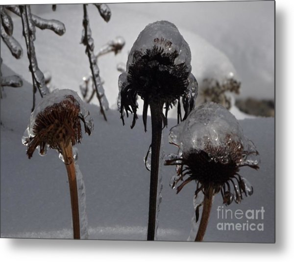 We Three Pods Metal Print