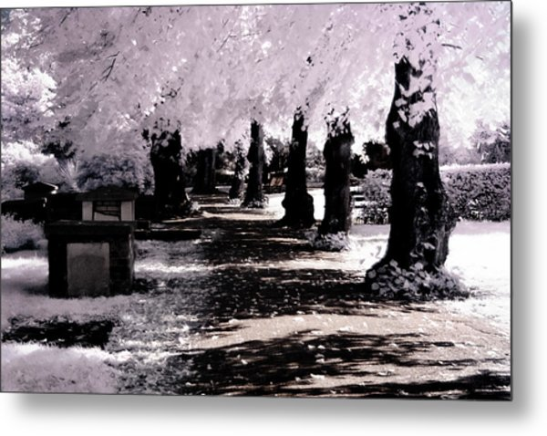 Metal Print featuring the photograph We Will Be Trees by Helga Novelli