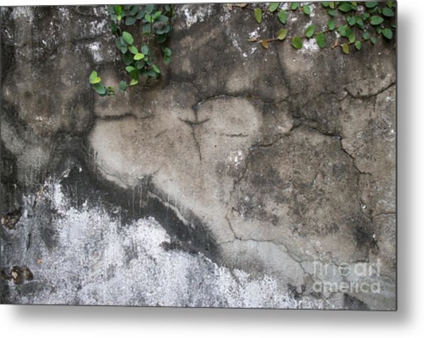 Weathered Broken Concrete Wall With Vines Metal Print