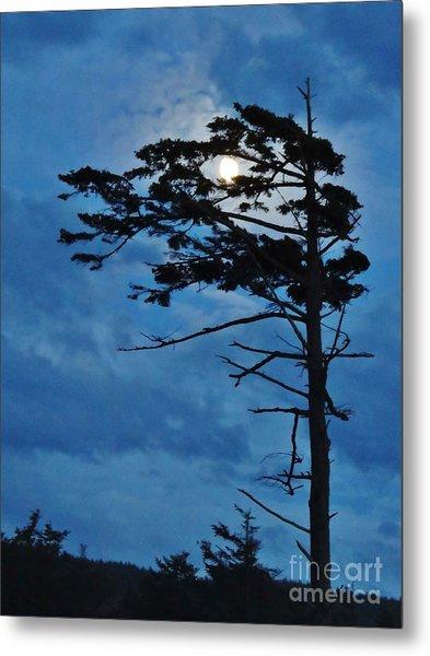 Weathered Moon Tree Metal Print