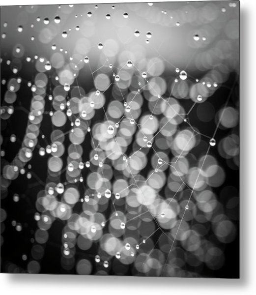 Web Of Water Metal Print