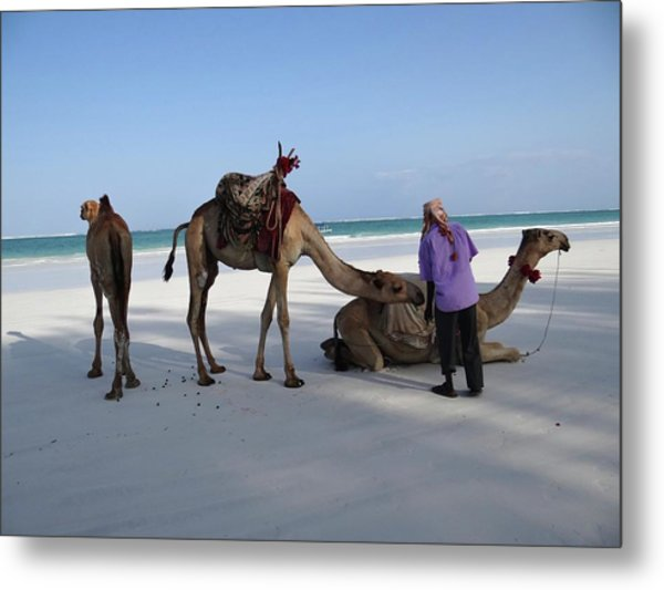 Wedding Camels In The Waiting ... Metal Print