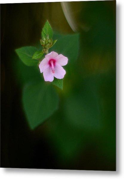 Weed Flower 907 Metal Print