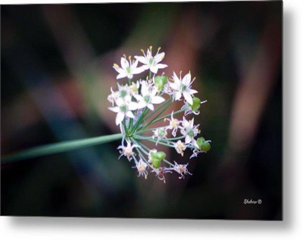 Weed Flower Metal Print