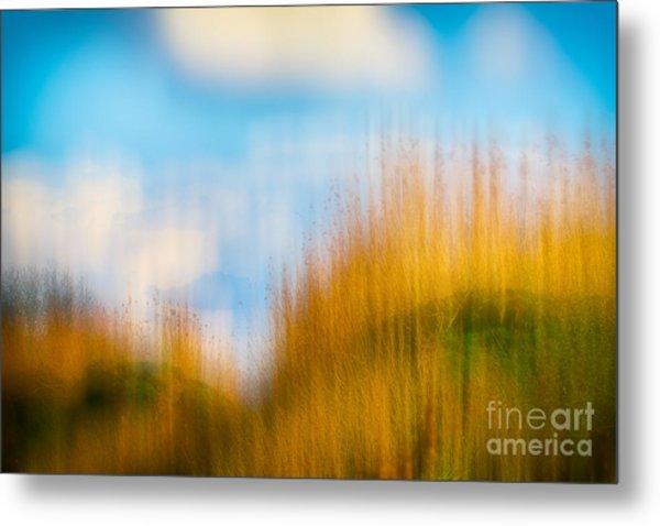 Weeds Under A Soft Blue Sky Metal Print