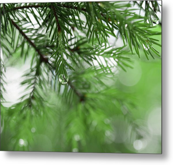 Weeping Pine 2 Metal Print