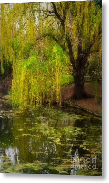 Weeping Pond Metal Print