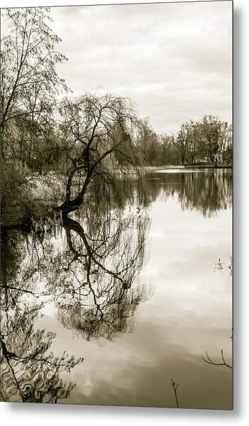 Weeping Willow Tree In The Winter Metal Print