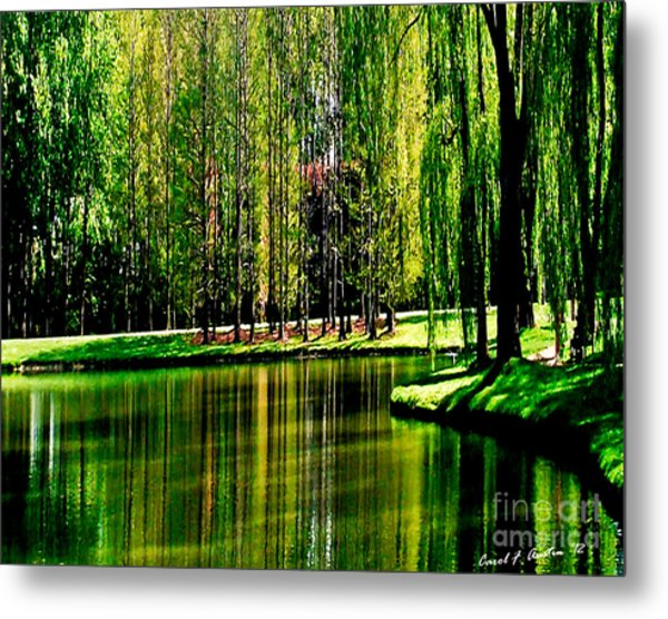 Weeping Willow Tree Reflective Moments Metal Print