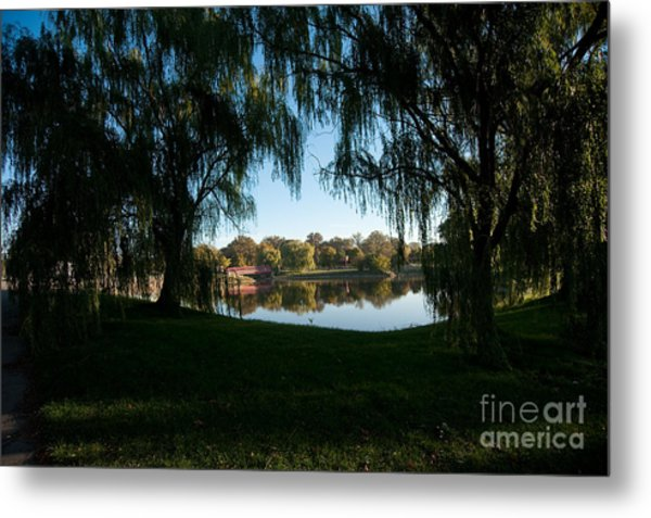 Weeping Willows Metal Print