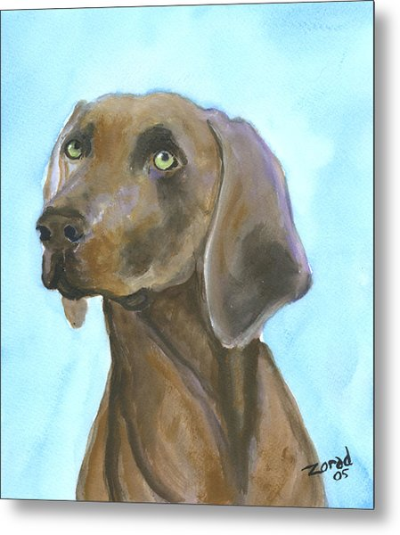 Weimarainer Dog Art Metal Print by Mary Jo Zorad