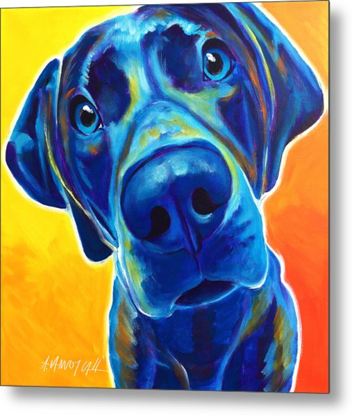 Weimaraner - Bentley Metal Print