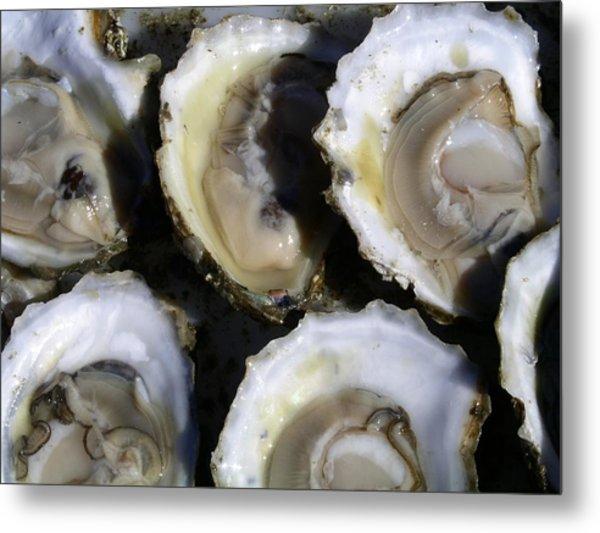 Wellfleet Oysters Metal Print
