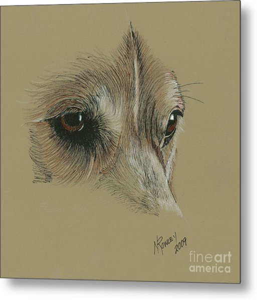 Welsh Corgi Eyes Metal Print by Norma Rowley